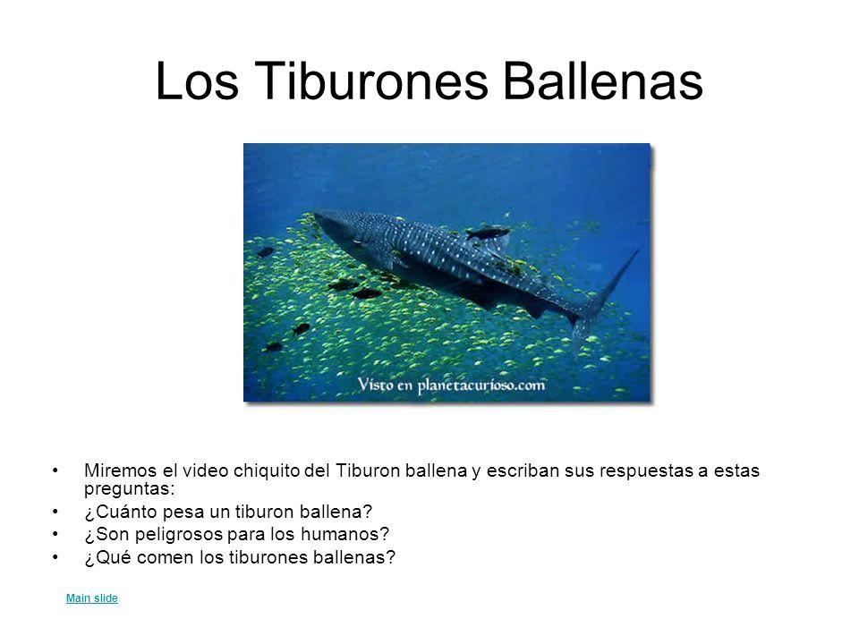 Las Maravillas del Yucatán Ruinas Mayas de Chichén Itzá Mi nuevo amigo La vida marina del Caribe