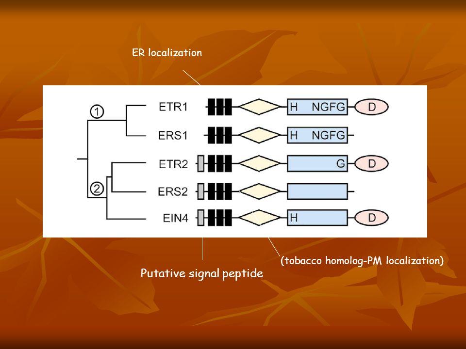 Putative signal peptide ER localization (tobacco homolog-PM localization)