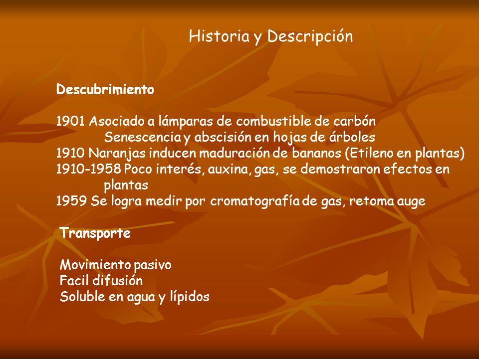 Historia y Descripción Descubrimiento 1901 Asociado a lámparas de combustible de carbón Senescencia y abscisión en hojas de árboles 1910 Naranjas indu