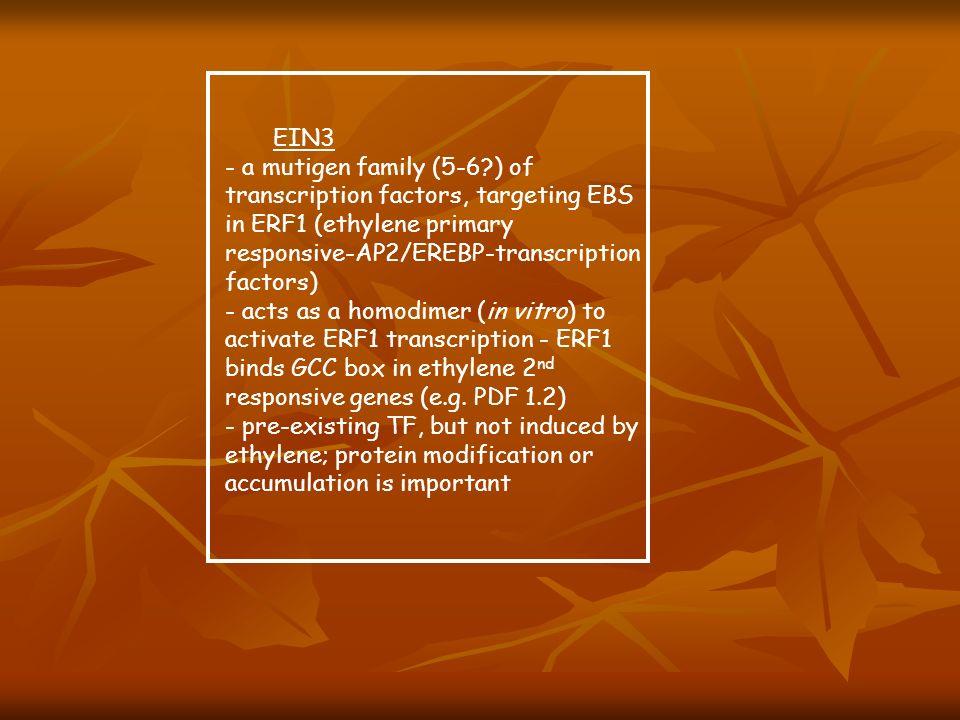 EIN3 - a mutigen family (5-6?) of transcription factors, targeting EBS in ERF1 (ethylene primary responsive-AP2/EREBP-transcription factors) - acts as
