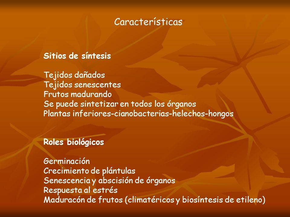 Características Sitios de síntesis Tejidos dañados Tejidos senescentes Frutos madurando Se puede sintetizar en todos los órganos Plantas inferiores-ci