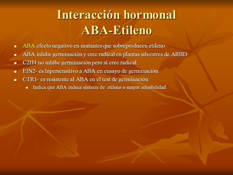 Interacción hormonal ABA-Etileno ABA efecto negativo en mutantes que sobreproducen etileno ABA efecto negativo en mutantes que sobreproducen etileno A
