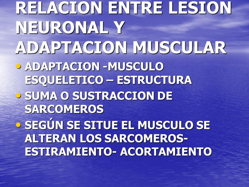RELACION ENTRE LESION NEURONAL Y ADAPTACION MUSCULAR ADAPTACION -MUSCULO ESQUELETICO – ESTRUCTURA ADAPTACION -MUSCULO ESQUELETICO – ESTRUCTURA SUMA O