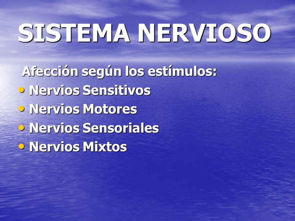 SISTEMA NERVIOSO Afección según los estímulos: Afección según los estímulos: Nervios Sensitivos Nervios Sensitivos Nervios Motores Nervios Motores Ner