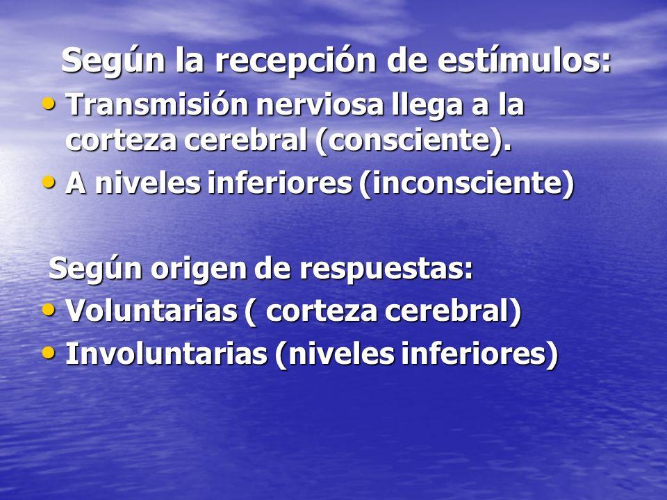 Según la recepción de estímulos: Según la recepción de estímulos: Transmisión nerviosa llega a la corteza cerebral (consciente). Transmisión nerviosa