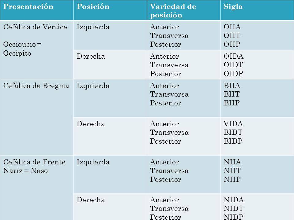 PresentaciónPosiciónVariedad de posición Sigla Cefálica de Vértice Occioucio = Occipito IzquierdaAnterior Transversa Posterior OIIA OIIT OIIP DerechaA