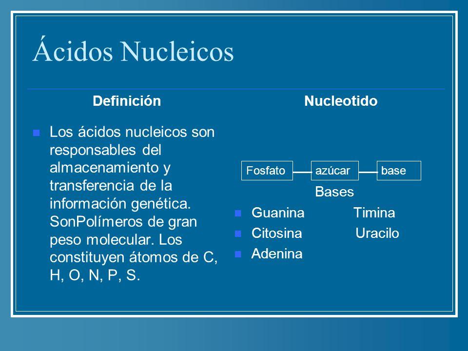 Ácidos Nucleicos Definición Los ácidos nucleicos son responsables del almacenamiento y transferencia de la información genética. SonPolímeros de gran