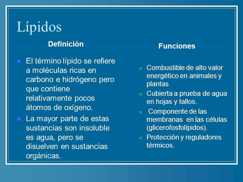 Lípidos Definición El término lípido se refiere a moléculas ricas en carbono e hidrógeno pero que contiene relativamente pocos átomos de oxígeno. La m
