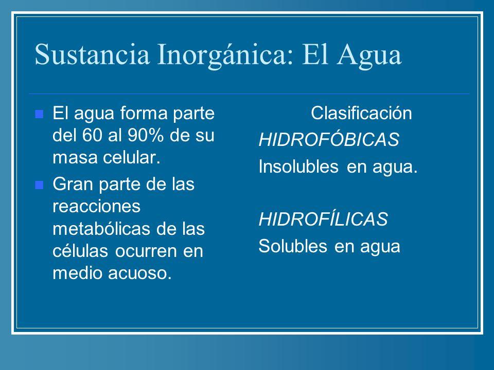 Sustancia Inorgánica: El Agua El agua forma parte del 60 al 90% de su masa celular. Gran parte de las reacciones metabólicas de las células ocurren en