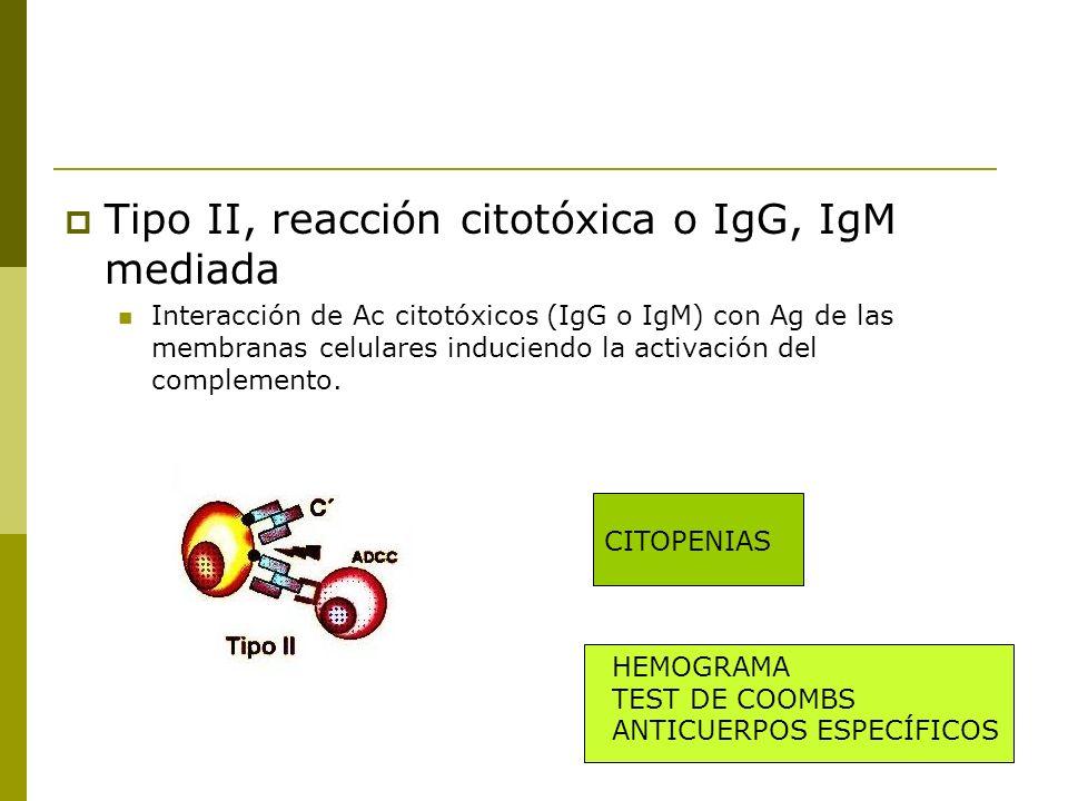 Tipo II, reacción citotóxica o IgG, IgM mediada Interacción de Ac citotóxicos (IgG o IgM) con Ag de las membranas celulares induciendo la activación d