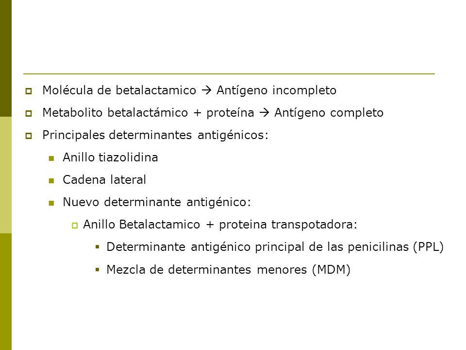 Molécula de betalactamico Antígeno incompleto Metabolito betalactámico + proteína Antígeno completo Principales determinantes antigénicos: Anillo tiaz