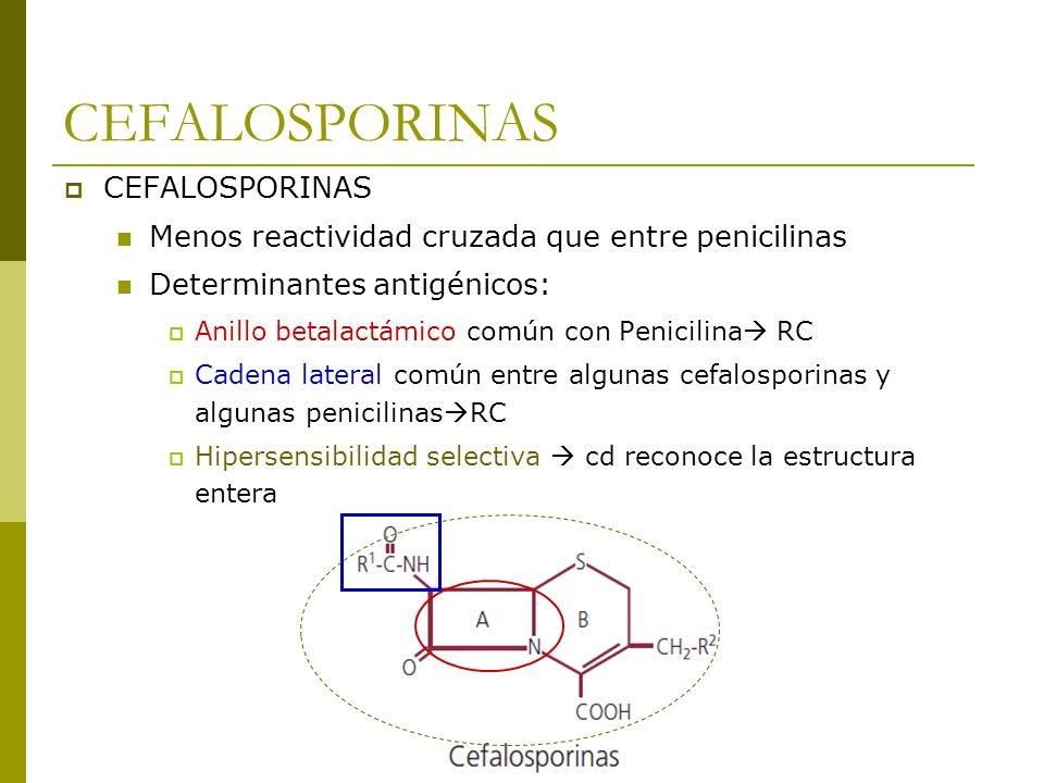 Menos reactividad cruzada que entre penicilinas Determinantes antigénicos: Anillo betalactámico común con Penicilina RC Cadena lateral común entre alg