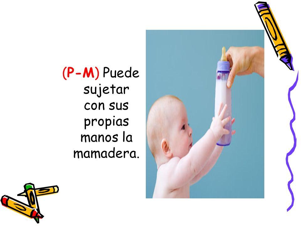 (P-M) Puede sujetar con sus propias manos la mamadera.