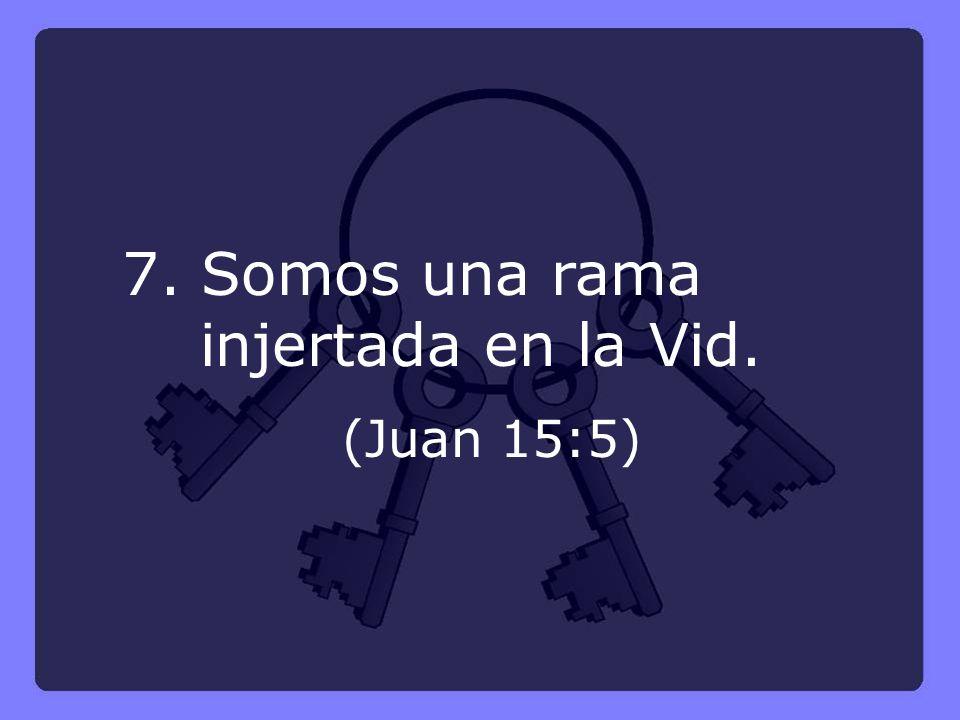 7. Somos una rama injertada en la Vid. (Juan 15:5)