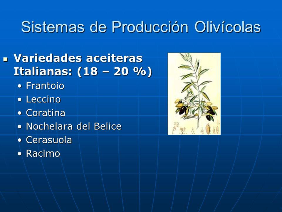 Sistemas de Producción Olivícolas Variedades aceiteras Italianas: (18 – 20 %) Variedades aceiteras Italianas: (18 – 20 %) FrantoioFrantoio LeccinoLecc