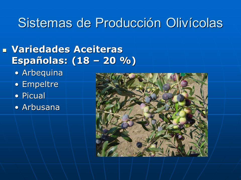 Sistemas de Producción Olivícolas Variedades Aceiteras Españolas: (18 – 20 %) Variedades Aceiteras Españolas: (18 – 20 %) ArbequinaArbequina EmpeltreE