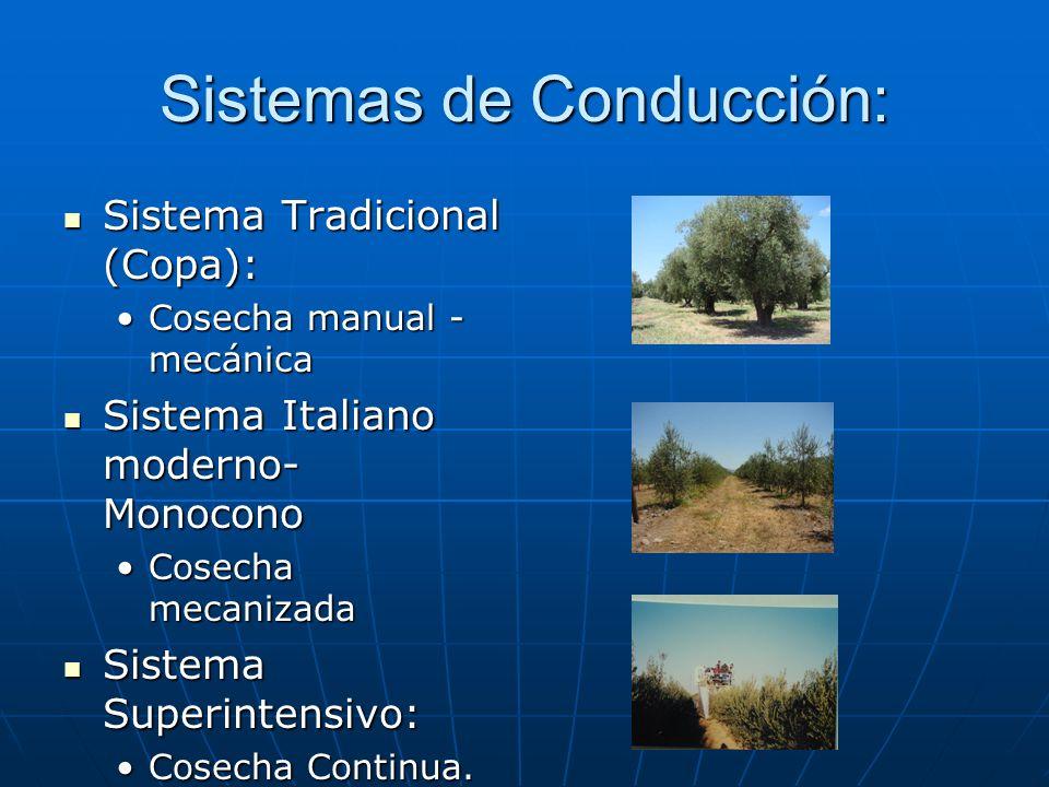 Sistemas de Conducción: Sistema Tradicional (Copa): Sistema Tradicional (Copa): Cosecha manual - mecánicaCosecha manual - mecánica Sistema Italiano mo