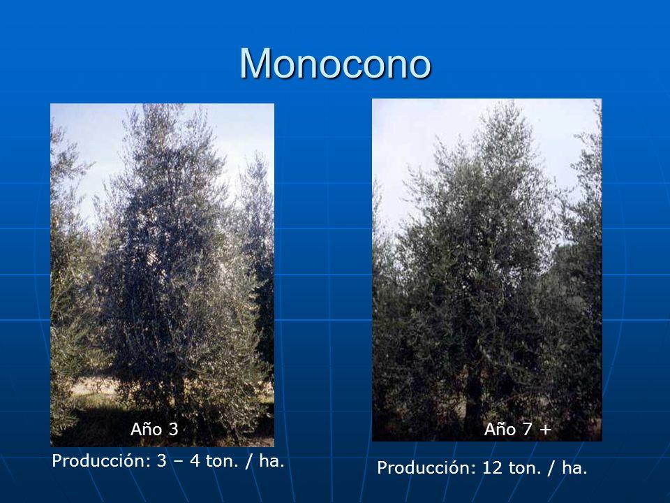 Monocono Año 7 +Año 3 Producción: 3 – 4 ton. / ha. Producción: 12 ton. / ha.