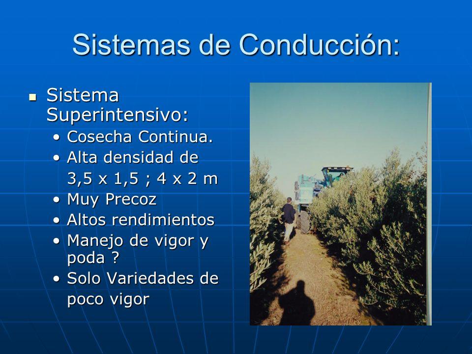 Sistemas de Conducción: Sistema Superintensivo: Sistema Superintensivo: Cosecha Continua.Cosecha Continua. Alta densidad deAlta densidad de 3,5 x 1,5