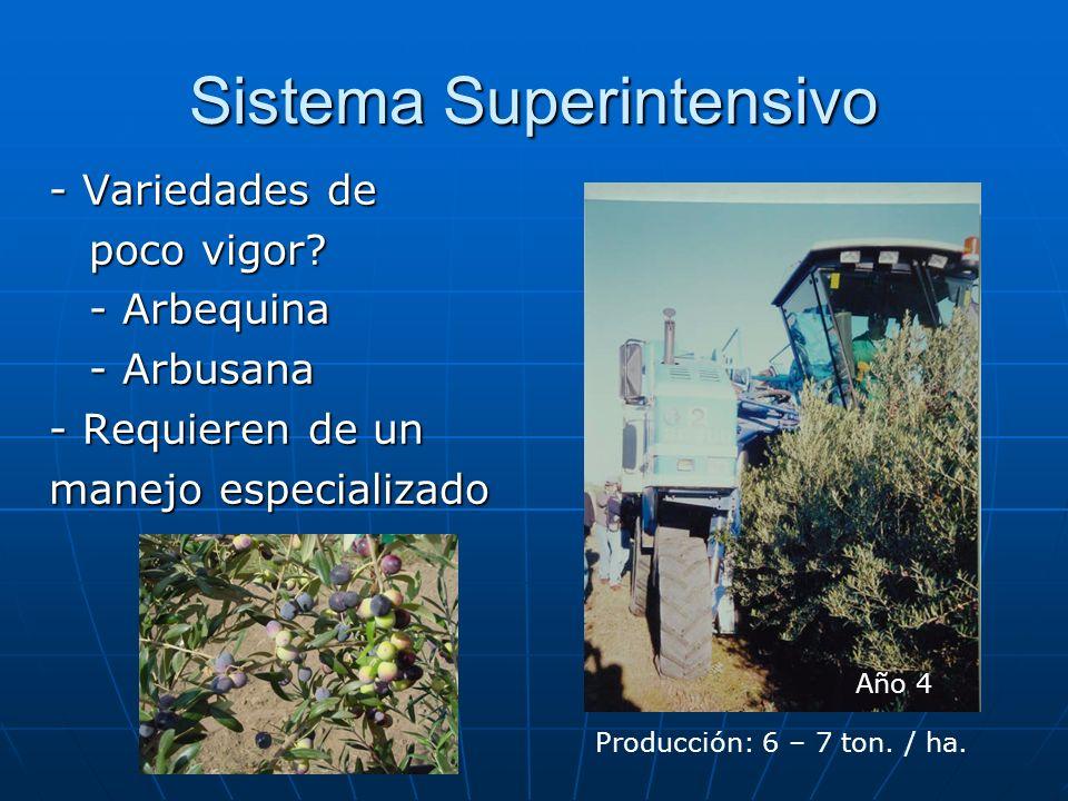 Sistema Superintensivo - Variedades de poco vigor? - Arbequina - Arbusana - Requieren de un manejo especializado Año 4 Producción: 6 – 7 ton. / ha.