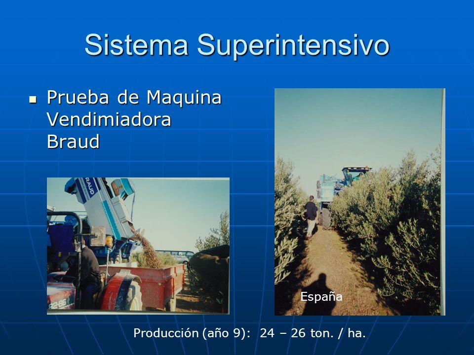 Sistema Superintensivo Prueba de Maquina Vendimiadora Braud Prueba de Maquina Vendimiadora Braud España Producción (año 9): 24 – 26 ton. / ha.