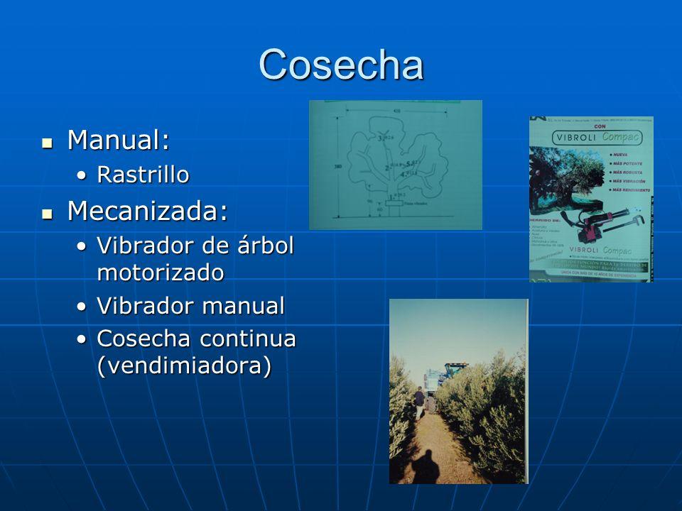 Cosecha Manual: Manual: RastrilloRastrillo Mecanizada: Mecanizada: Vibrador de árbol motorizadoVibrador de árbol motorizado Vibrador manualVibrador ma