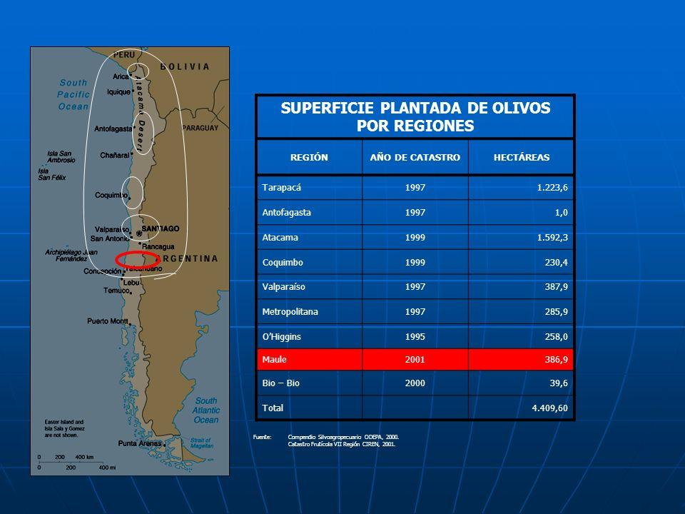 SUPERFICIE PLANTADA DE OLIVOS POR REGIONES REGIÓNAÑO DE CATASTROHECTÁREAS Tarapacá19971.223,6 Antofagasta19971,0 Atacama19991.592,3 Coquimbo1999230,4