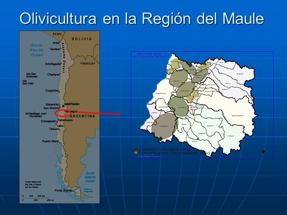 Olivicultura en la Región del Maule COMUNAS TOTALMENTE APTAS COMUNAS APTAS Y MEDIANAMENTE APTAS