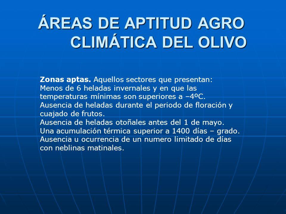 ÁREAS DE APTITUD AGRO CLIMÁTICA DEL OLIVO Zonas aptas. Aquellos sectores que presentan: Menos de 6 heladas invernales y en que las temperaturas mínima