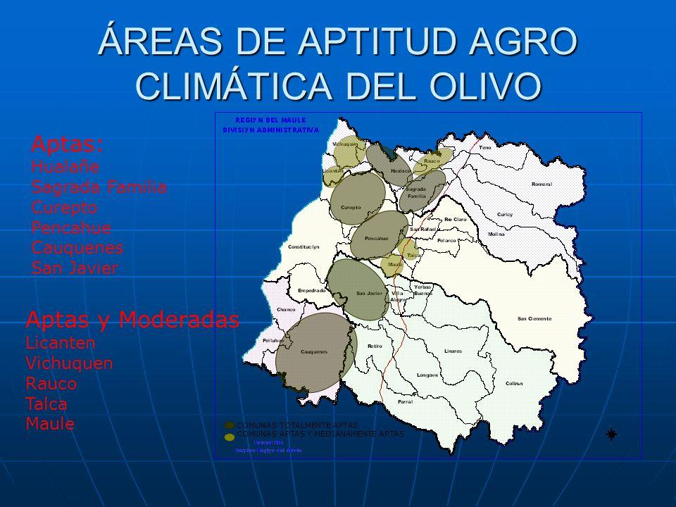 ÁREAS DE APTITUD AGRO CLIMÁTICA DEL OLIVO COMUNAS TOTALMENTE APTAS COMUNAS APTAS Y MEDIANAMENTE APTAS Aptas: Hualañe Sagrada Familia Curepto Pencahue