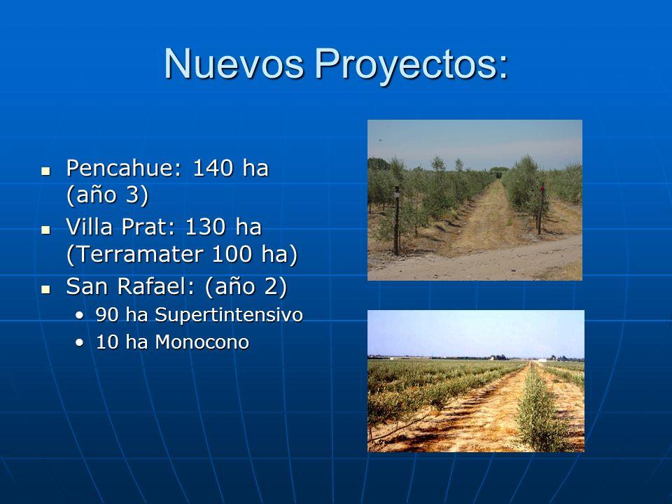 Nuevos Proyectos: Pencahue: 140 ha (año 3) Pencahue: 140 ha (año 3) Villa Prat: 130 ha (Terramater 100 ha) Villa Prat: 130 ha (Terramater 100 ha) San