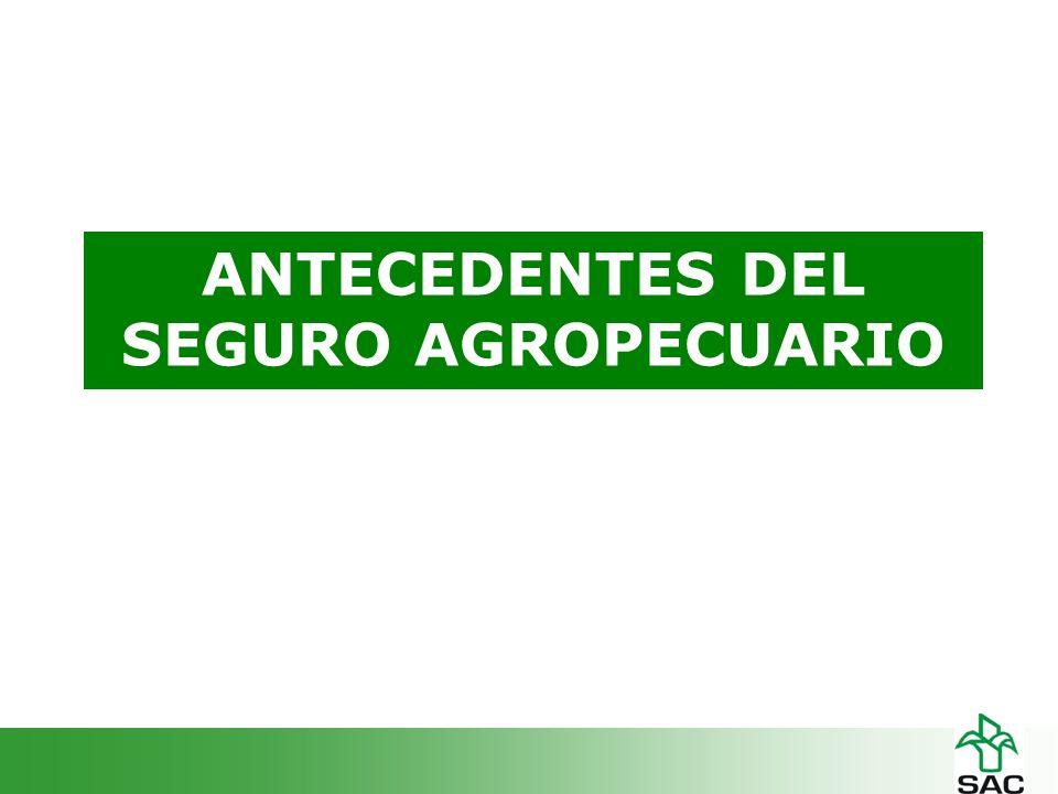 PRODUCTORES Baja cultura del aseguramiento Baja asociatividad y empresarización Elevada Informalidad Limitado suministro de información a las aseguradoras