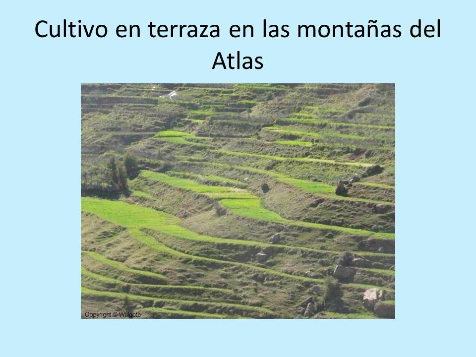 Cultivo en terraza en las montañas del Atlas