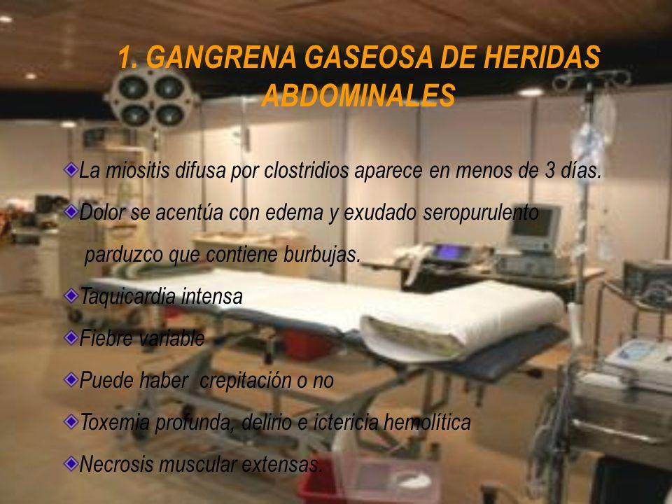 1. GANGRENA GASEOSA DE HERIDAS ABDOMINALES La miositis difusa por clostridios aparece en menos de 3 días. Dolor se acentúa con edema y exudado seropur
