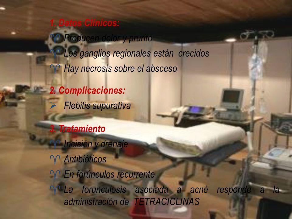 1. Datos Clínicos: Producen dolor y prurito Los ganglios regionales están crecidos Hay necrosis sobre el absceso 2. Complicaciones: Flebitis supurativ