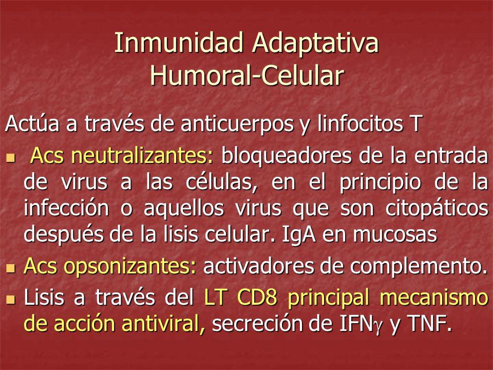 Inmunidad Adaptativa Humoral-Celular Actúa a través de anticuerpos y linfocitos T Acs neutralizantes: bloqueadores de la entrada de virus a las célula