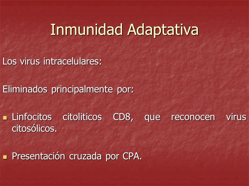 Inmunidad Adaptativa Los virus intracelulares: Eliminados principalmente por: Linfocitos citoliticos CD8, que reconocen virus citosólicos. Linfocitos