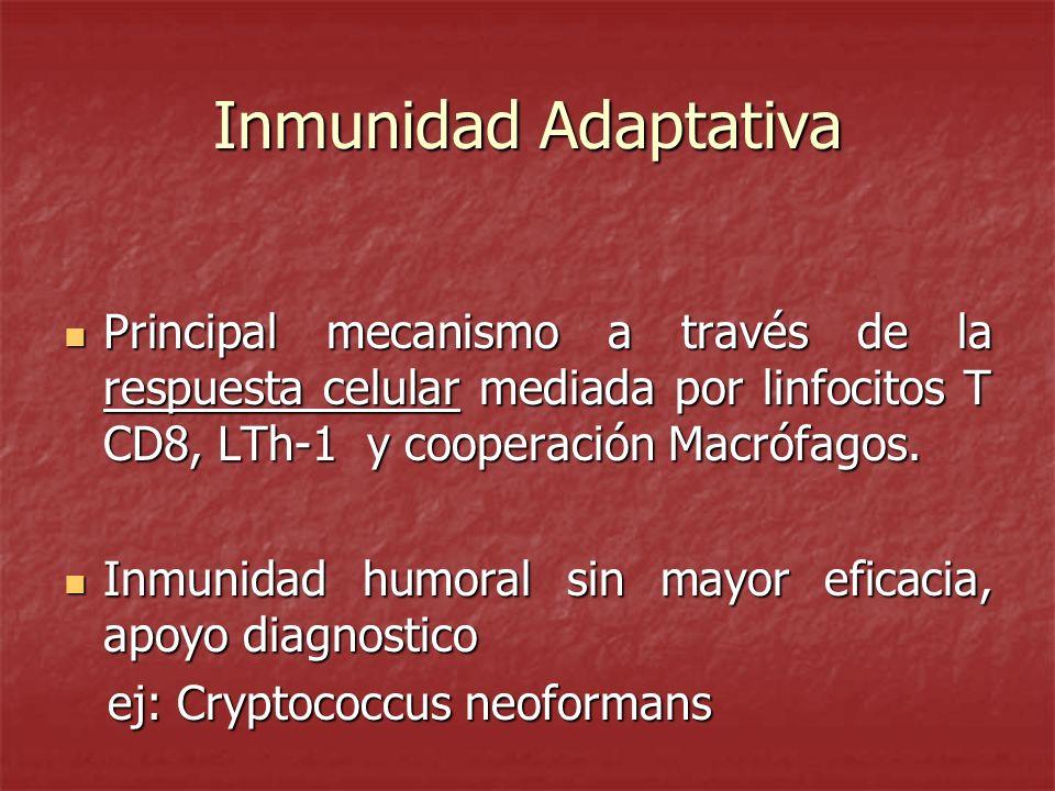 Inmunidad Adaptativa Principal mecanismo a través de la respuesta celular mediada por linfocitos T CD8, LTh-1 y cooperación Macrófagos. Principal meca