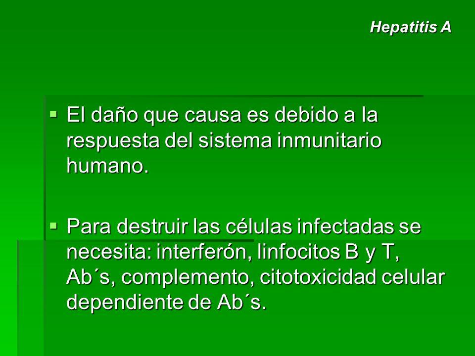El daño que causa es debido a la respuesta del sistema inmunitario humano. El daño que causa es debido a la respuesta del sistema inmunitario humano.