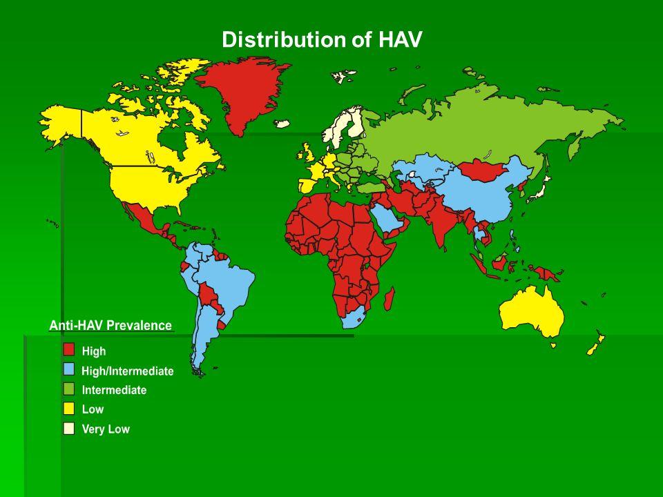 Distribution of HAV