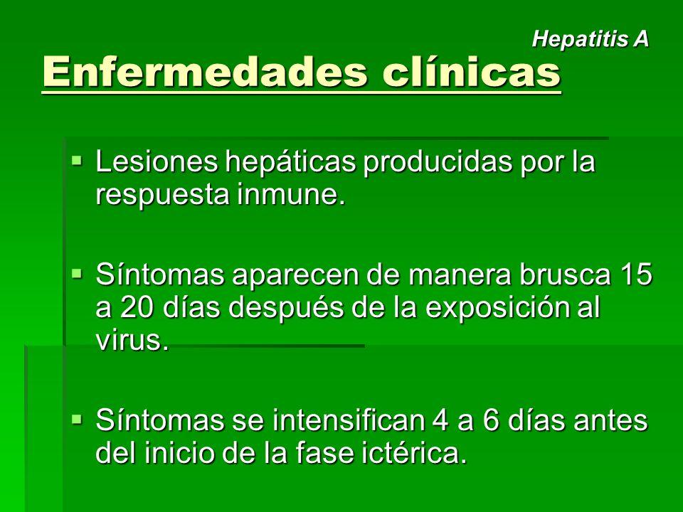 Enfermedades clínicas Lesiones hepáticas producidas por la respuesta inmune. Lesiones hepáticas producidas por la respuesta inmune. Síntomas aparecen