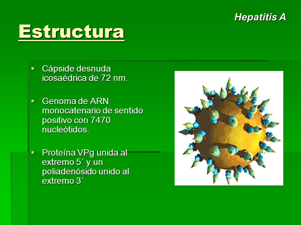 Estructura Cápside desnuda icosaédrica de 72 nm. Cápside desnuda icosaédrica de 72 nm. Genoma de ARN monocatenario de sentido positivo con 7470 nucleó