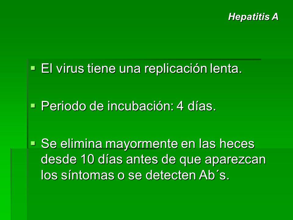 El virus tiene una replicación lenta. El virus tiene una replicación lenta. Periodo de incubación: 4 días. Periodo de incubación: 4 días. Se elimina m