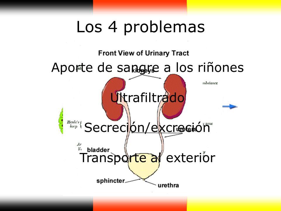 Los 4 problemas Aporte de sangre a los riñones Ultrafiltrado Secreción/excreción Transporte al exterior