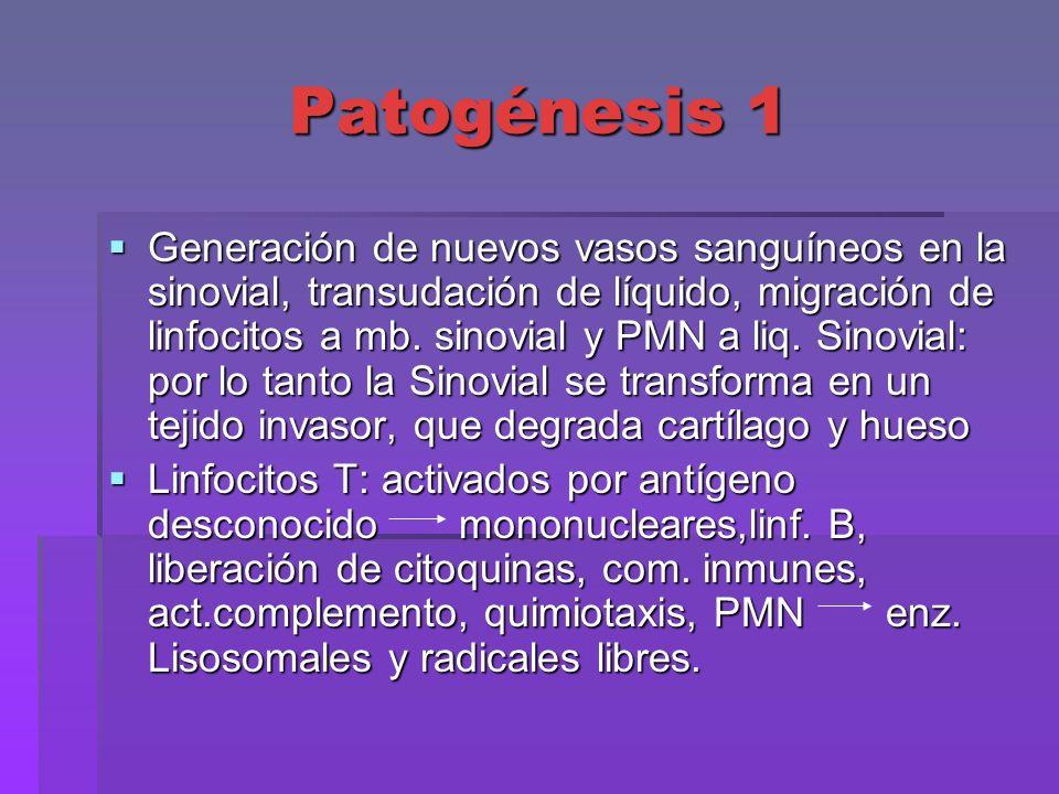 Patogénesis 1 Generación de nuevos vasos sanguíneos en la sinovial, transudación de líquido, migración de linfocitos a mb. sinovial y PMN a liq. Sinov