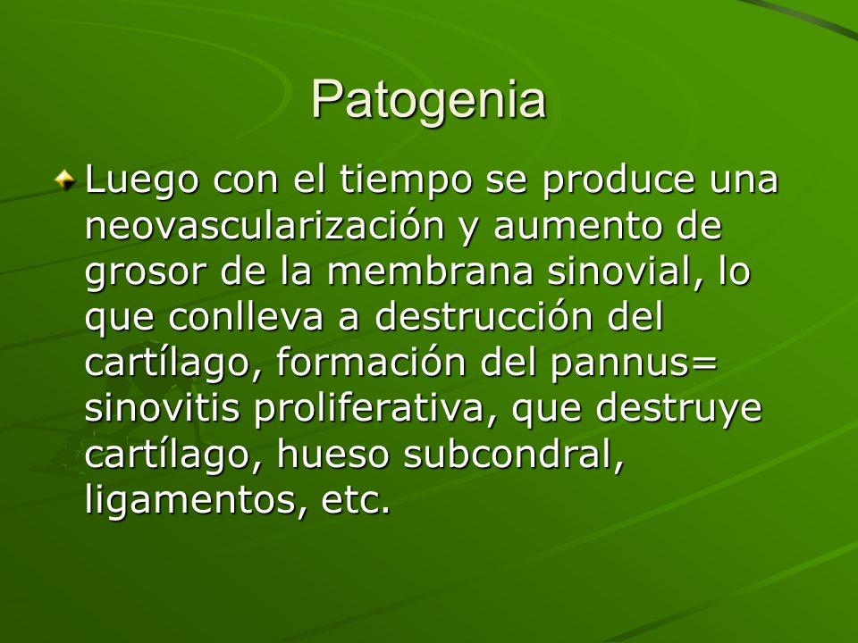 Patogenia Luego con el tiempo se produce una neovascularización y aumento de grosor de la membrana sinovial, lo que conlleva a destrucción del cartíla