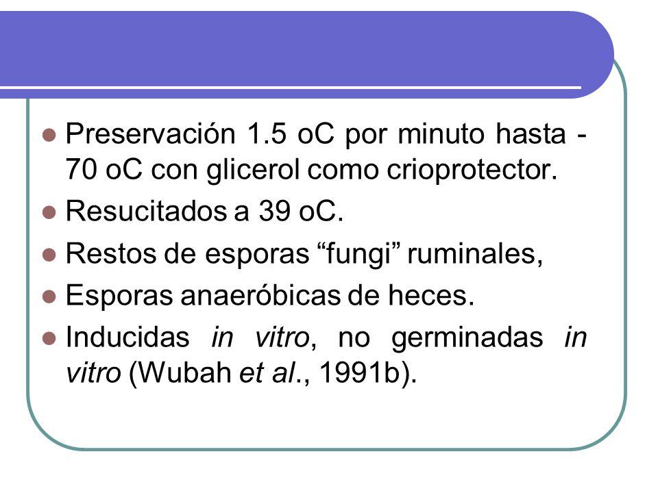 Preservación 1.5 oC por minuto hasta - 70 oC con glicerol como crioprotector. Resucitados a 39 oC. Restos de esporas fungi ruminales, Esporas anaeróbi