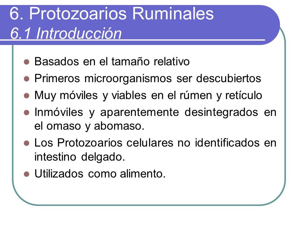 6. Protozoarios Ruminales 6.1 Introducción Basados en el tamaño relativo Primeros microorganismos ser descubiertos Muy móviles y viables en el rúmen y