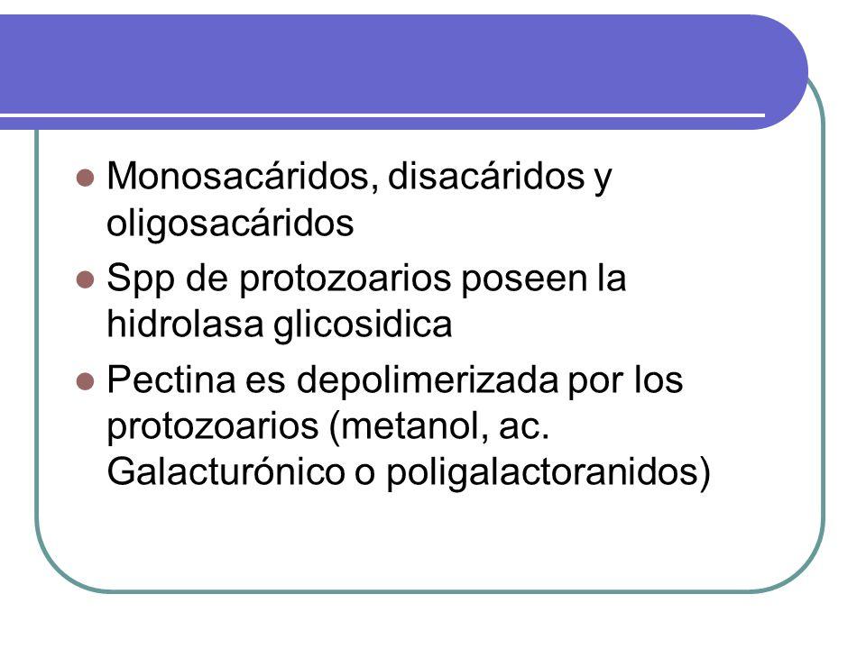 Monosacáridos, disacáridos y oligosacáridos Spp de protozoarios poseen la hidrolasa glicosidica Pectina es depolimerizada por los protozoarios (metano