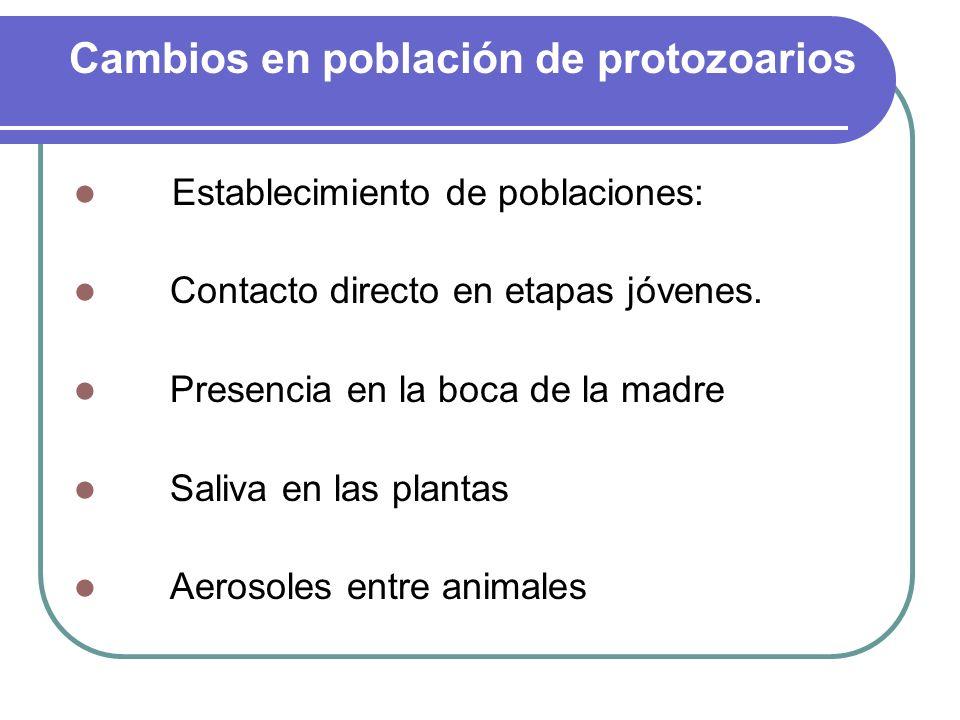Cambios en población de protozoarios Establecimiento de poblaciones: Contacto directo en etapas jóvenes. Presencia en la boca de la madre Saliva en la